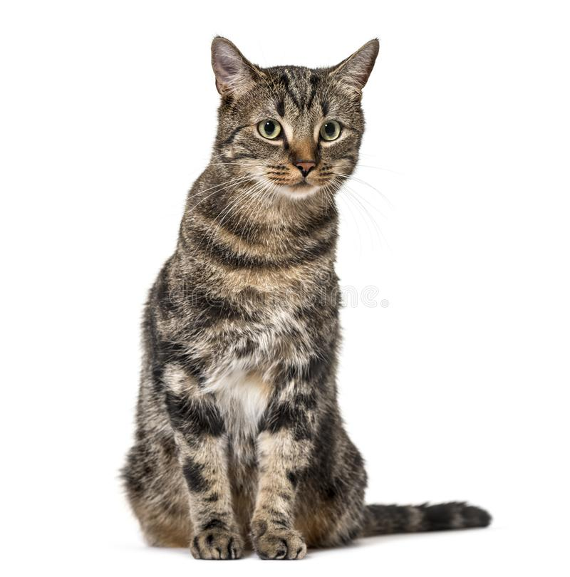 Striped усаживание кота смешанн-породы, изолированное на белизне, (2 года старого стоковые фотографии rf