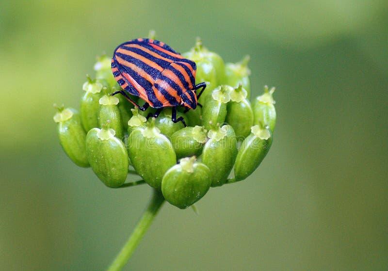 Bug identification
