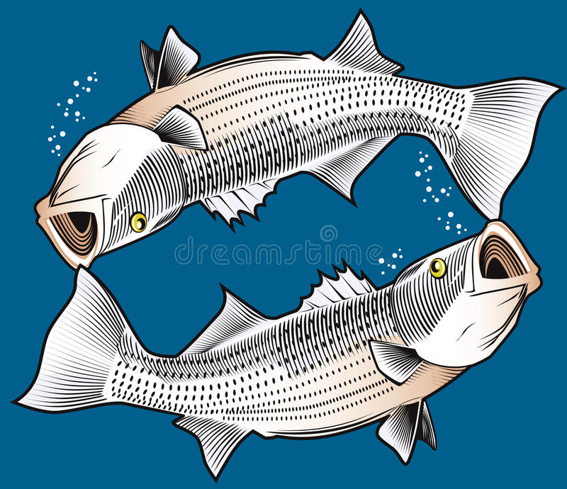 Download Striped Bass stock vector. Illustration of upsidedown - 39700980