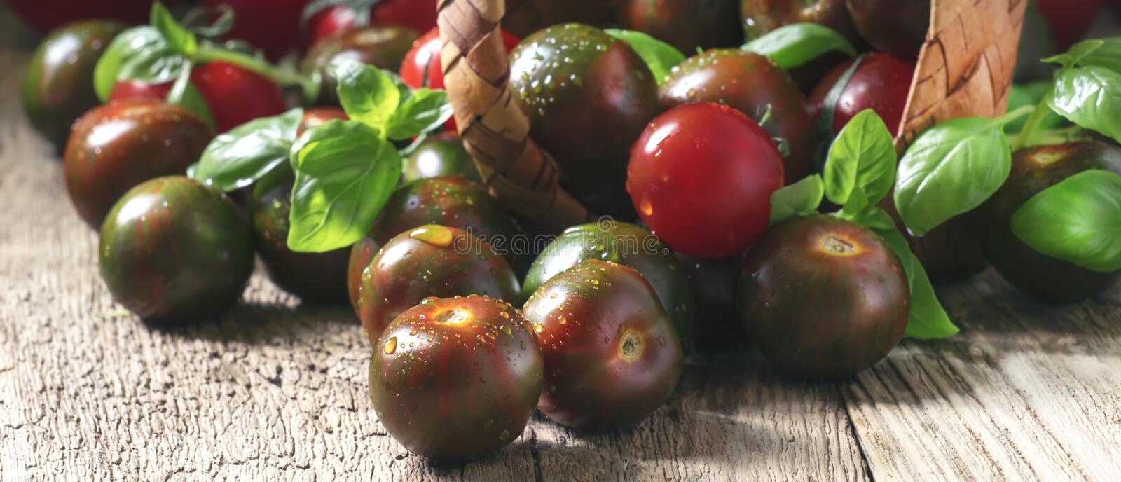 Striped black tomatoes with green basil spill out of basket, vintage wooden table, selective focus. Striped black tomatoes with green basil spill out of basket royalty free stock images