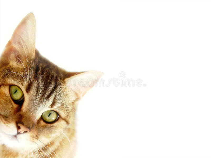 Download Striped cat is hiding stock photo. Image of striped, cacti - 6343244