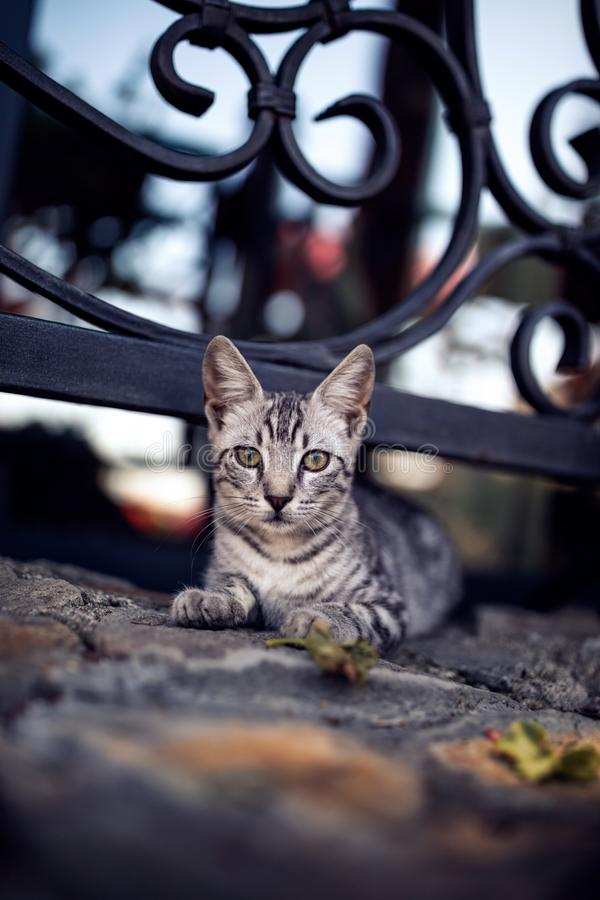 Striped cat laying on stone floor near a fence with a lattice royalty free stock image