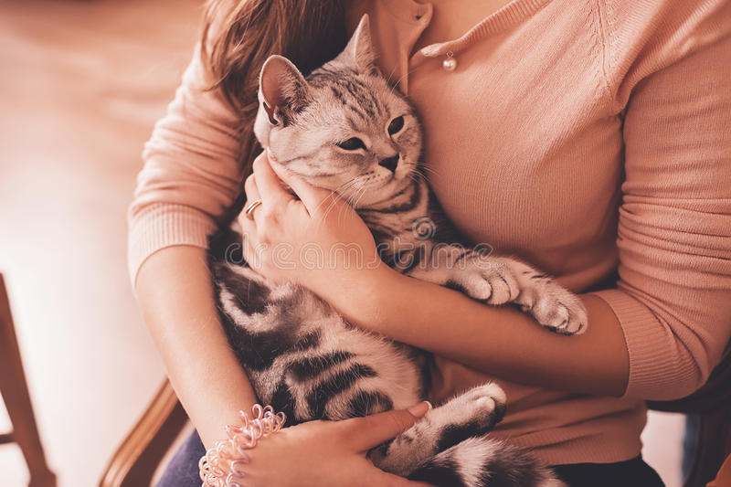 Striped cat lying in woman hands stock image