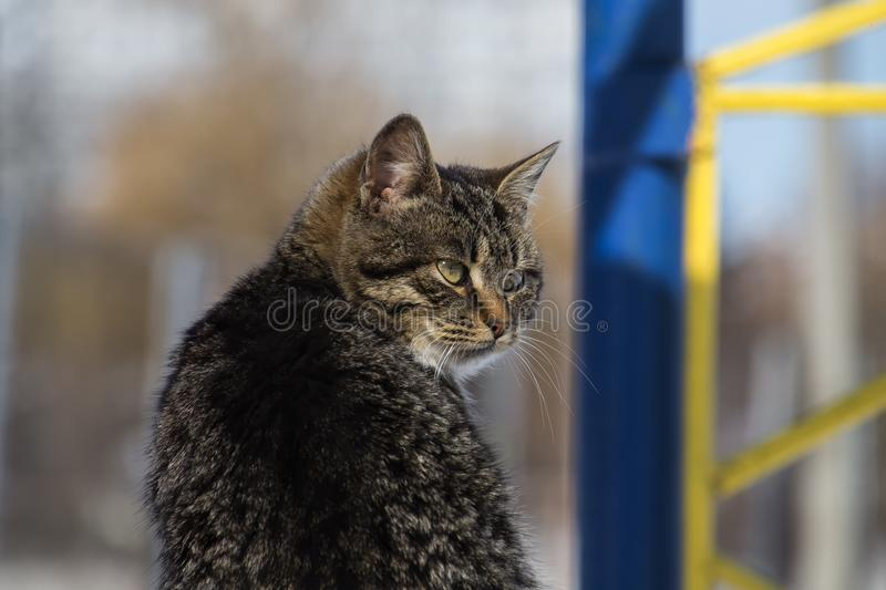 Tabby cat sits at a half-turn and looked away. Striped cat sits at a half-turn and looked away royalty free stock images