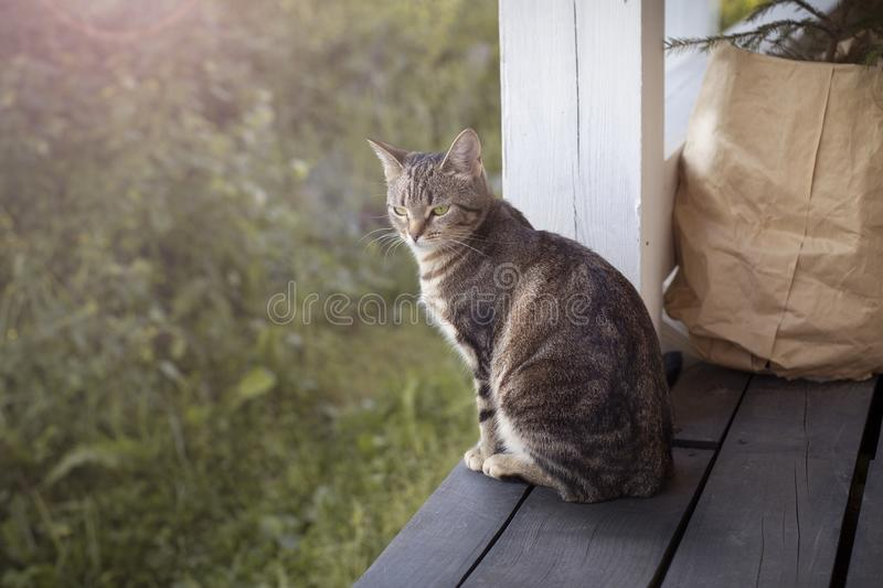 Cat sitting on the porch stock photo