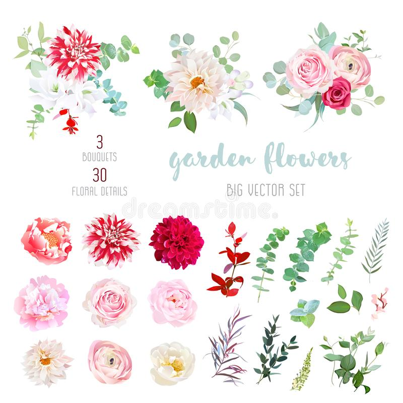 Striped, creamy and burgundy red dahlia, pink ranunculus, rose,. Peony flowers and decorative plants - eucalyptus, agonis, parvifolia big vector collection. All vector illustration