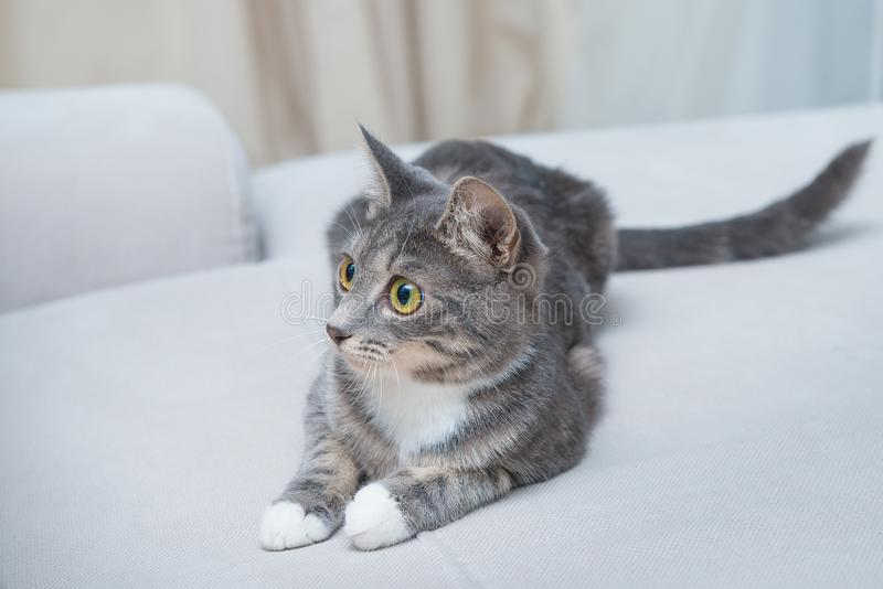 Striped domestic young cat on couch. Pets and animals, mammals and cats, theme. Striped domestic young cat on couch. Pets and animals, mammals and cats theme stock photo