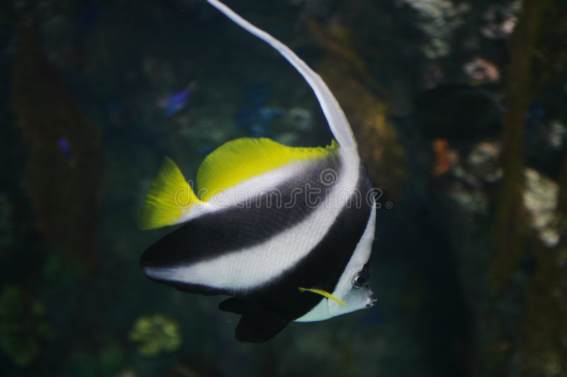 Download Striped Fish stock photo. Image of jh9x1486, aquatic, life - 4434090