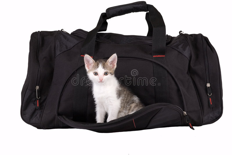 Striped Kitten In The Bag Royalty Free Stock Photos