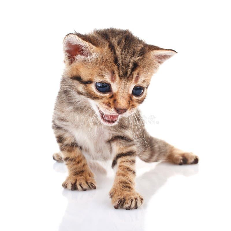 Striped kitten crying stock photos