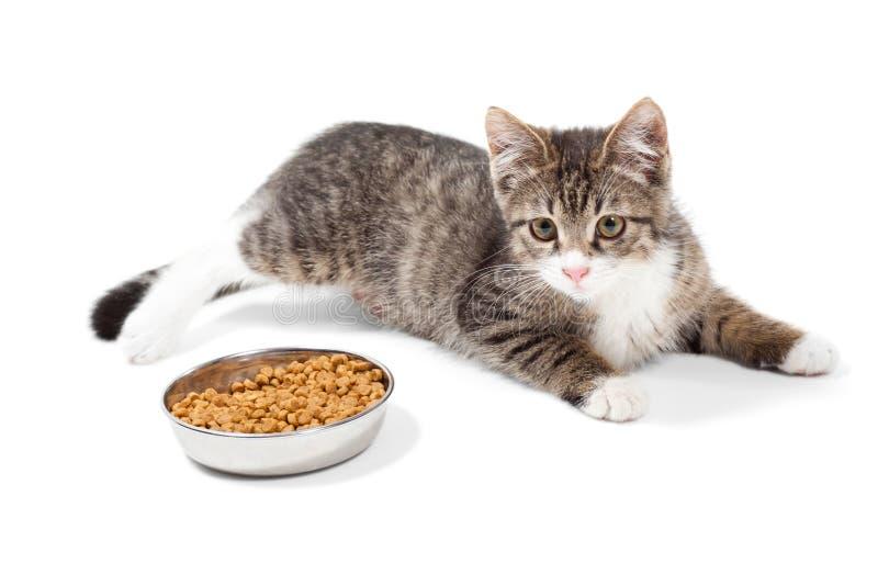Striped kitten eats a dry feed royalty free stock photo