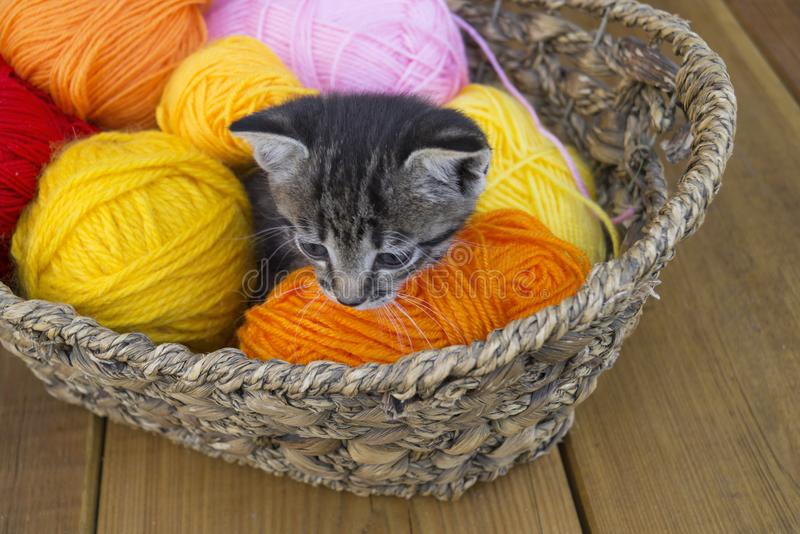A striped kitten plays with balls of wool. Wicker basket, wooden floor and black background. royalty free stock photo