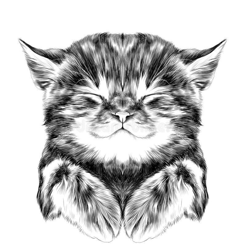 Striped kitten sleeping sketch vector stock illustration
