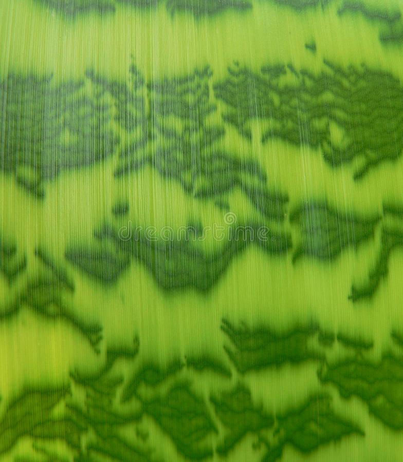 Download Striped leaf background stock photo. Image of multi, bright - 2699446