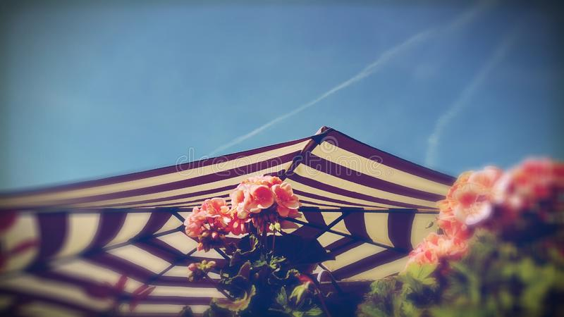 Striped Patio Umbrella. A striped patio umbrella on a sunny day against a blue sky and pink flowers stock photos