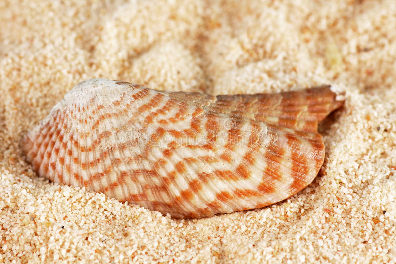 Striped shell on sand