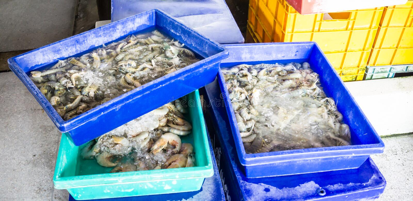 Mantis shrimps and tiger prawn in seafood market stock photos