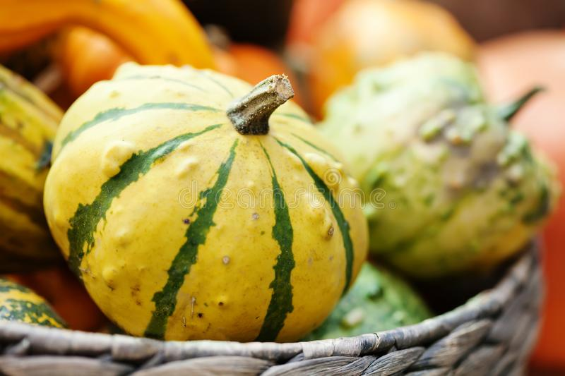 Striped yellow pumpkin basket. Halloween thanksgiving day background. Organic vegetables harvest still life. Selective stock photo
