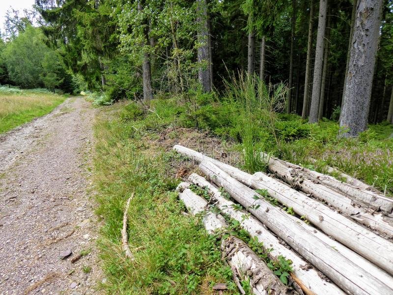 Stripped spruce logs from wood cutting near forest road in hills. stock photos