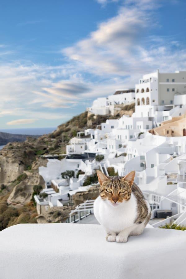 Stripy kot cieszy się ładną pogodę w Oia wiosce, Santorini, Grecja obraz royalty free