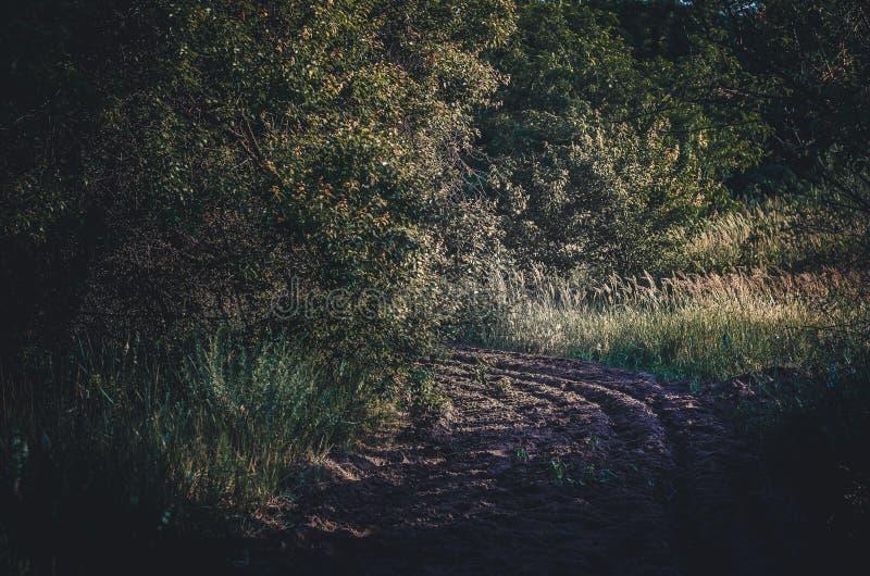 Striscia dell'amplificatore di separazione del fuoco in una riserva nazionale Sabbia dell'aratro per una cinghia dal fuoco Forest immagini stock libere da diritti