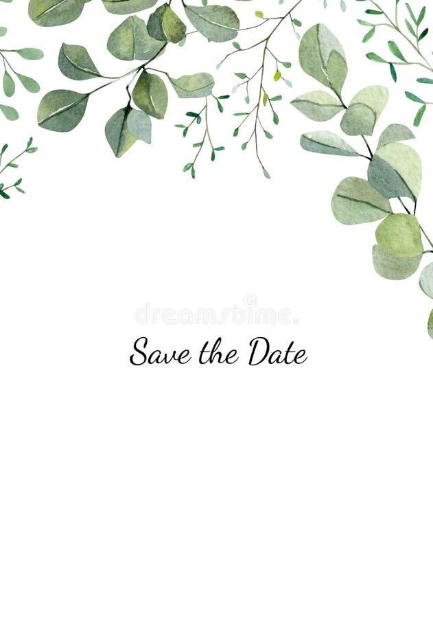 Striscione di acquerello con eucalipto di dollaro verniciato a mano e piante di verde Parentesi verdi e foglie isolate royalty illustrazione gratis