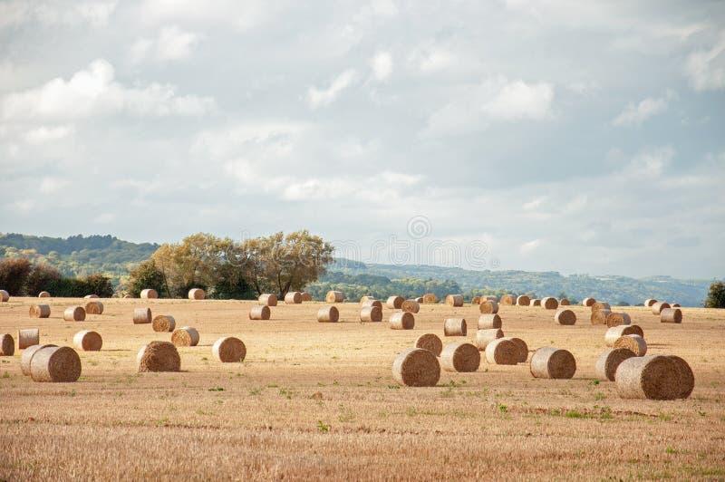 Strobalen in oogsttijd in het Engelse platteland stock foto's