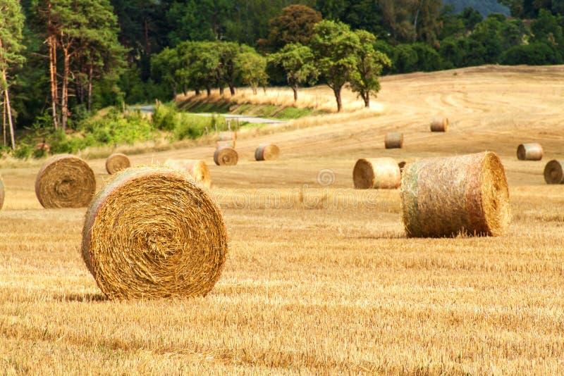 Strohballen auf dem Gebiet am Waldsommertag am Bauernhof in der Tschechischen Republik Erntemais Landschaft Moravian-Hochländer lizenzfreie stockfotos