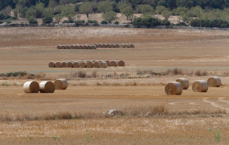 Strohballen auf Feld stockfotografie