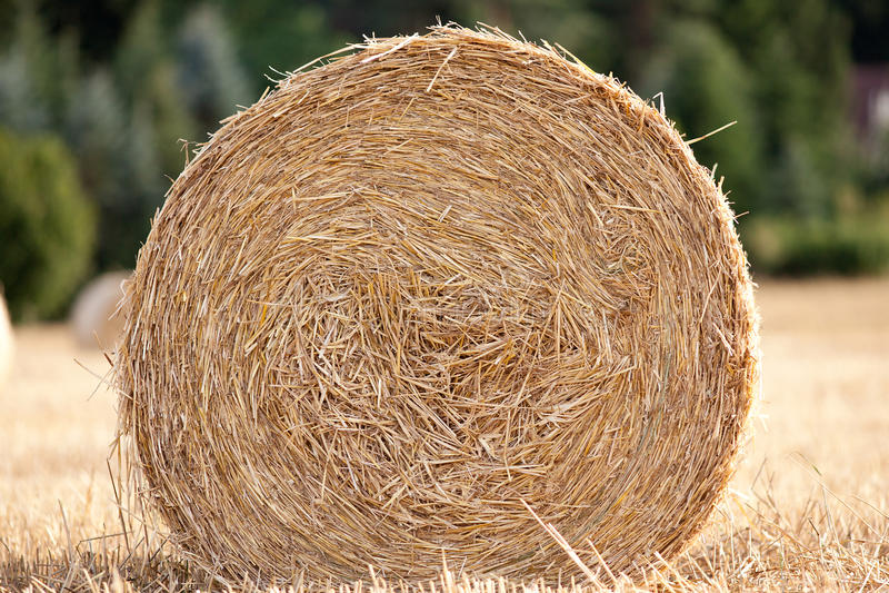 Strohballen auf Getreidefeld in der Sommerernte stockbilder