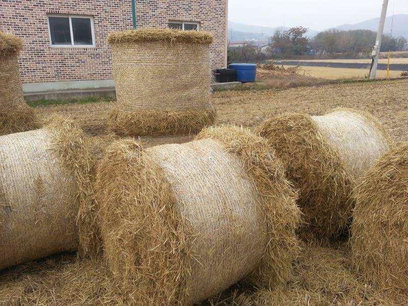 Strohstapel-Bauernhoflandwirtschaft stockfotos