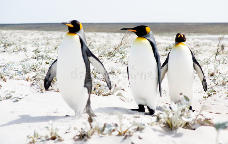 Stroll do pinguim fotografia de stock royalty free