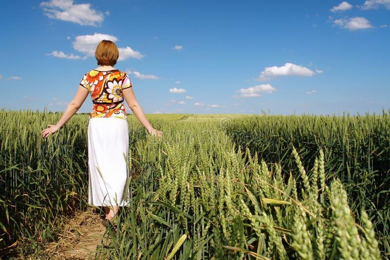 Stroll romantique dans le maïs de blé photos stock