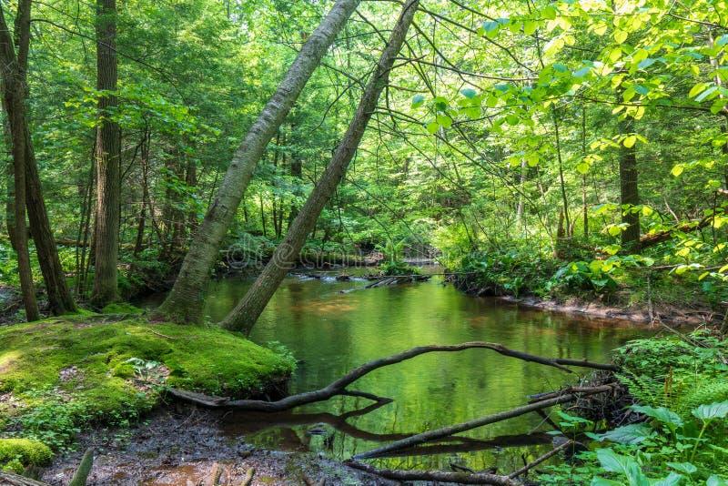 Strom, der einen üppigen grünen Wald durchfließt lizenzfreie stockfotografie