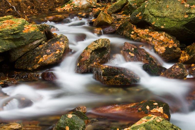 Strom im Herbst stockfotografie