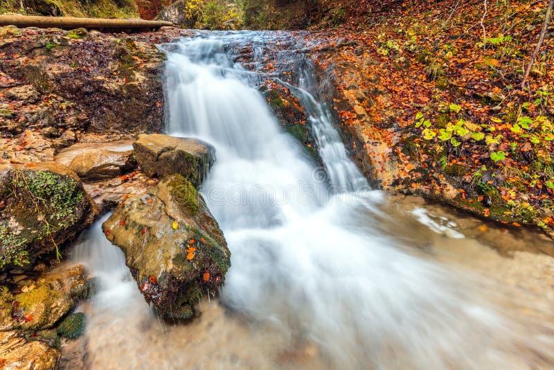 Strom im Herbstwald lizenzfreie stockbilder