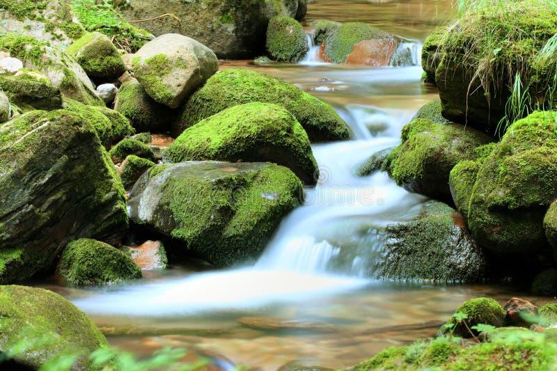 Strom im Wald lizenzfreie stockbilder