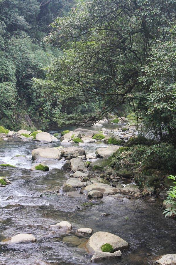 Strom im Wald lizenzfreie stockfotos