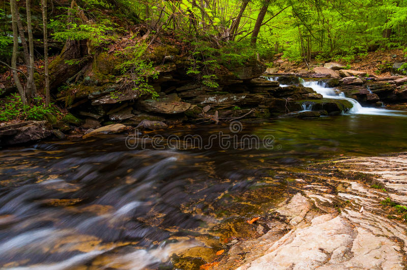 Strom in Ricketts Glen State Park stockbilder