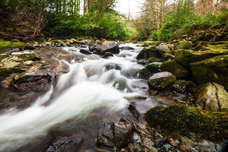 Strom in Tollymore Forest Park lizenzfreie stockfotos