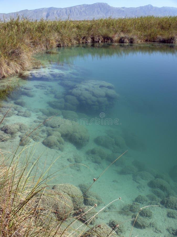stromatolite för cienegascuatromexico rev arkivfoton