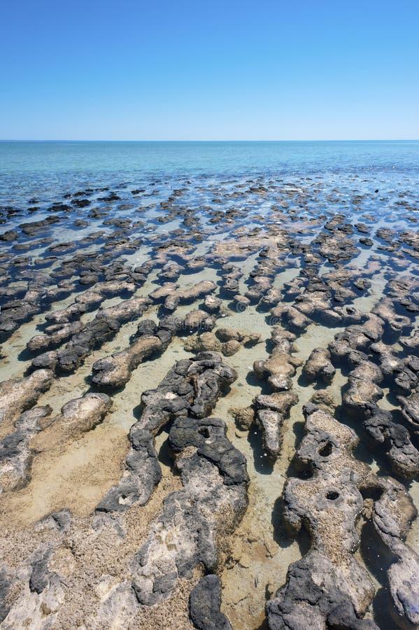 stromatolites obraz royalty free