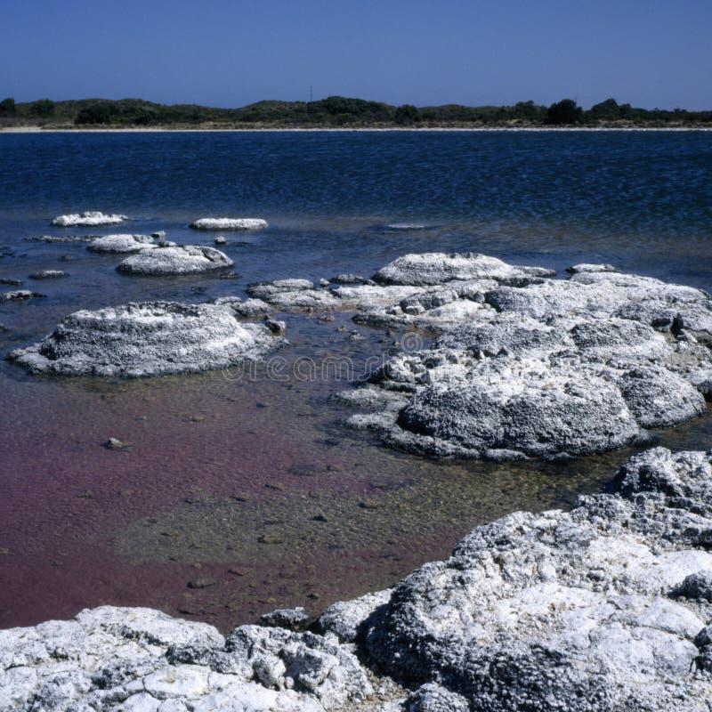 stromatolites стоковые изображения rf