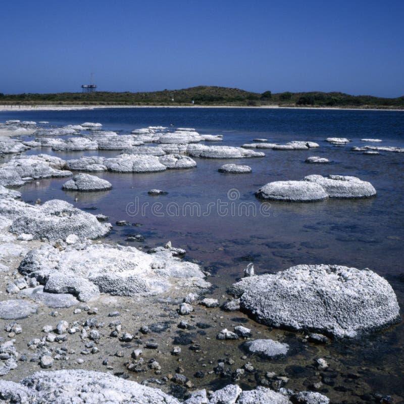 stromatolites photo stock