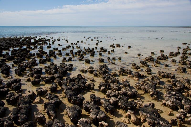stromatolites στοκ εικόνες με δικαίωμα ελεύθερης χρήσης