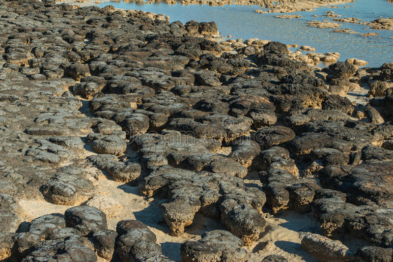 stromatolites 图库摄影