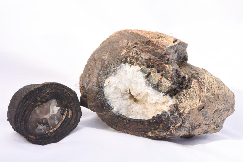 stromatolites arkivbild
