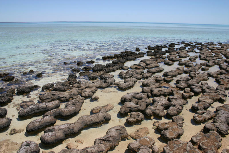 Stromatolites, Australie occidentale images libres de droits