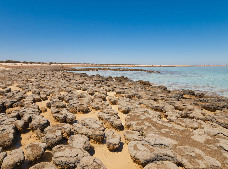 Stromatolites w terenie rekin zatoka, zachodnia australia australasia fotografia royalty free