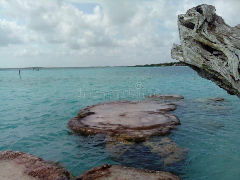 Stromatolitos lizenzfreie stockbilder